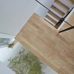 Maison design avec un arbre interieur