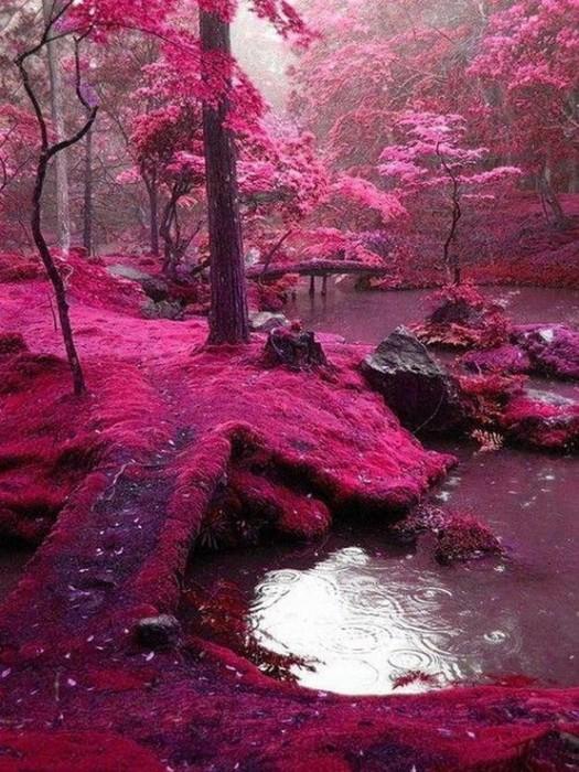 Kyoto-Japan.