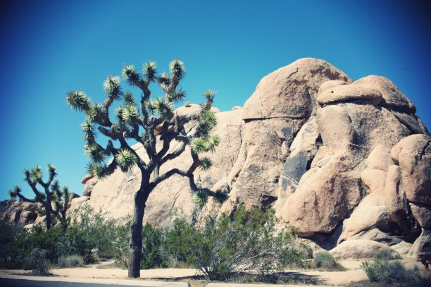 rocher-yucca-joshua-tree