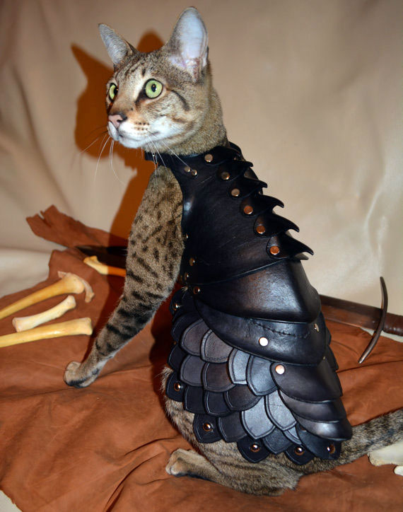 armure-pour-chat-02