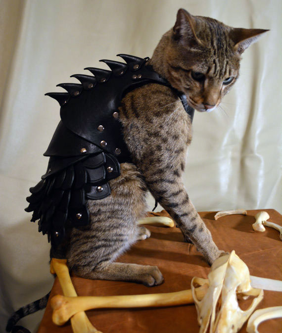 armure-pour-chat-03