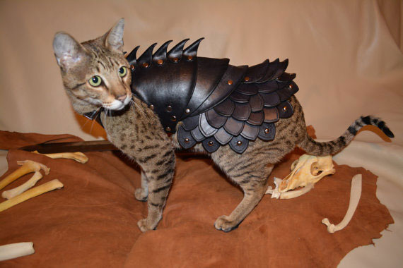 armure-pour-chat-04