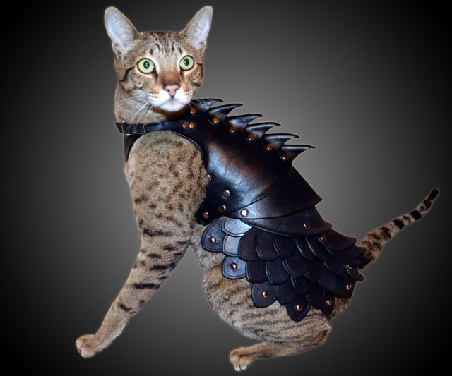 armure-pour-chat