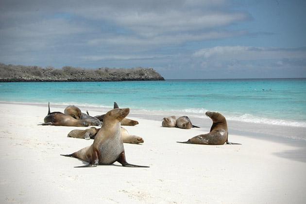 Bahia-Gardner-Galapagos
