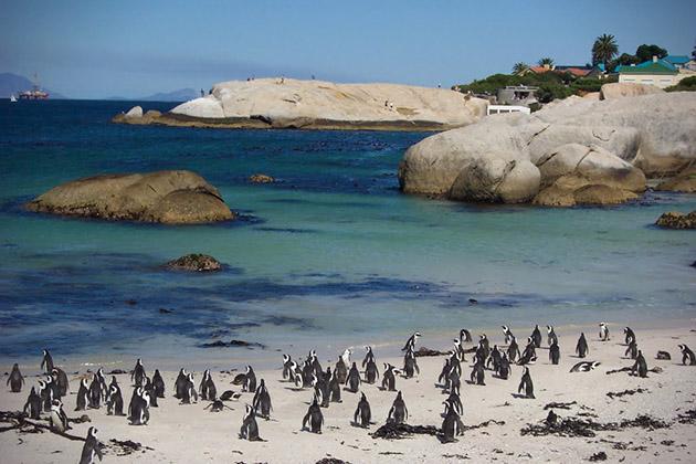 Foxy-Beach-afrique-sud