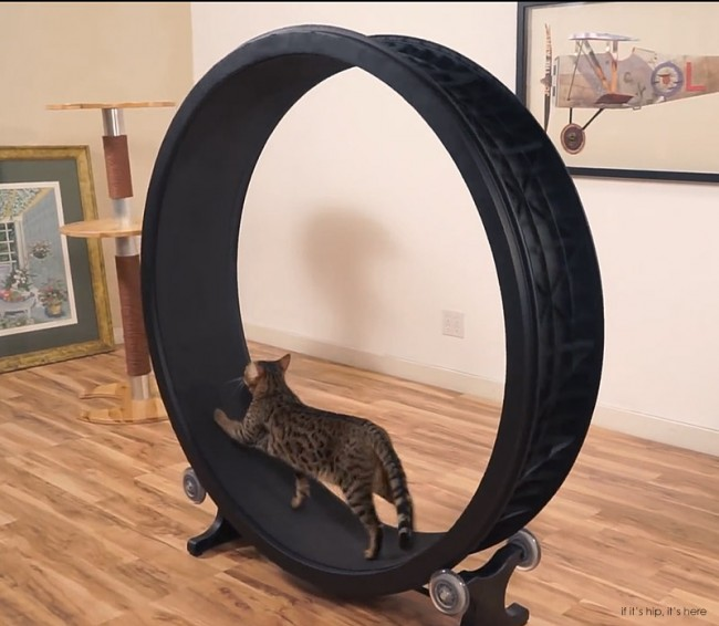 roue-exercice-chat-02