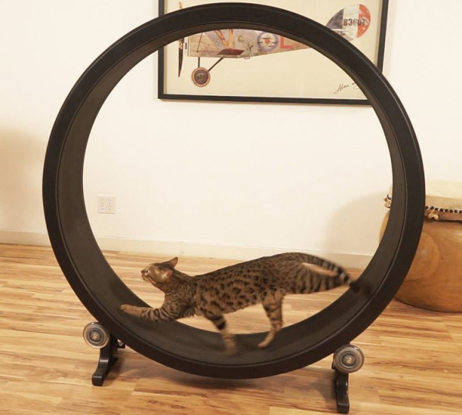 roue-exercice-chat-03