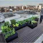 Jardin sur un toit