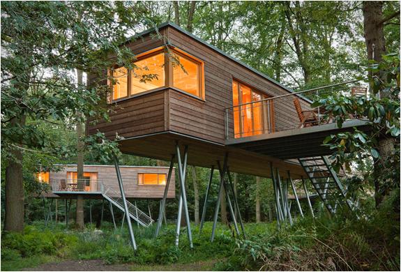 Cabane bois arbre Baumraum 10