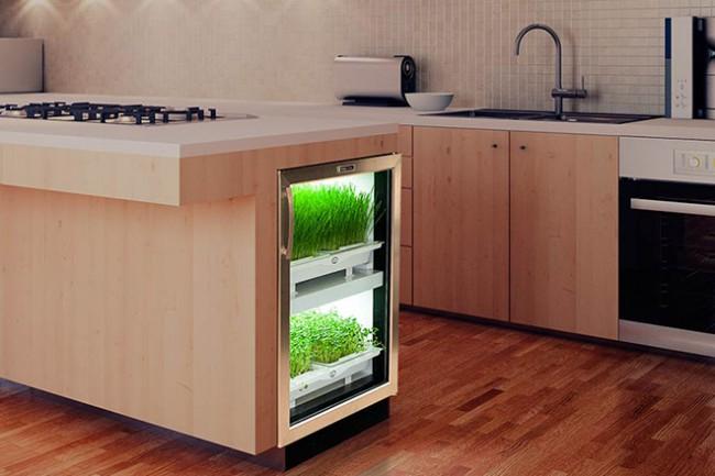 Cultivateur herbes fraiches
