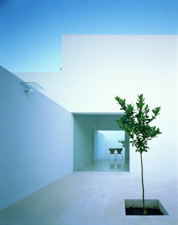 Cour intérieure avec arbre