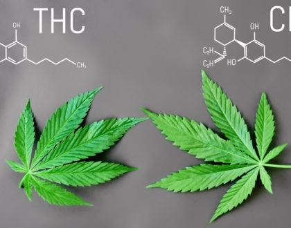CBD et THC : Quelle est la différence ?
